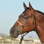 Rawhide Noseband Rope-Halfter Set Classic Equine